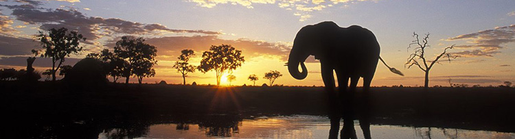 elephant-silhouetted-at-sunset--chobe-national-park--botswana.jpg
