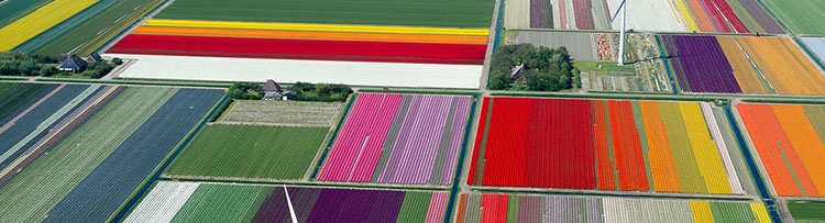 Tulip-Fileds-Noord-Holland.jpg